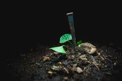 Καρφί στο ρύπο Στοκ Φωτογραφία