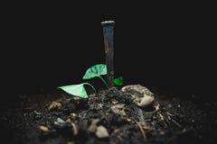 Καρφί στο ρύπο Στοκ φωτογραφίες με δικαίωμα ελεύθερης χρήσης