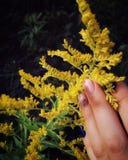 Καρφιά και λουλούδια Στοκ Φωτογραφία