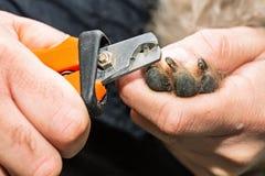 Καρφιά σκυλιών ψαλιδίσματος Groomer στοκ φωτογραφίες