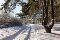 Καρφωμένο με τη διχάλα πεύκο στο υπόβαθρο ενός χειμερινού τοπίου Στοκ εικόνες με δικαίωμα ελεύθερης χρήσης