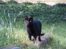 Καρφώστε το γατάκι Στοκ φωτογραφίες με δικαίωμα ελεύθερης χρήσης
