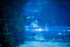 Καρχαρίας και ψάρια στο ενυδρείο Στοκ φωτογραφία με δικαίωμα ελεύθερης χρήσης