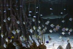Καρχαρίας με τα ψάρια γύρω και τη βλάστηση γύρω Στοκ Φωτογραφία