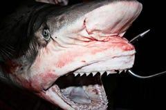 καρχαρίας πώλησης Στοκ εικόνες με δικαίωμα ελεύθερης χρήσης