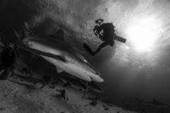 Καρχαρίας σκοπέλων και μια σκιαγραφία φωτογραφιών δυτών σκαφάνδρων στο Μαύρο και Στοκ Εικόνα