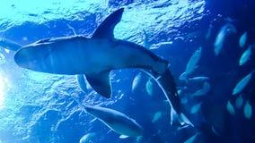 Καρχαρίας στο νερό στοκ εικόνες με δικαίωμα ελεύθερης χρήσης