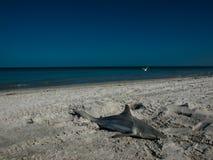 Καρχαρίας τιγρών Στοκ Φωτογραφία