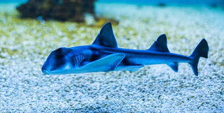 Καρχαρίας του Τζάκσον λιμένων στοκ φωτογραφία