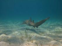 καρχαρίας υποβρύχιος Στοκ φωτογραφίες με δικαίωμα ελεύθερης χρήσης