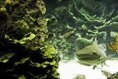 καρχαρίας Στοκ Φωτογραφίες