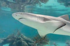καρχαρίας Στοκ Εικόνα