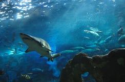 καρχαρίας στοκ φωτογραφίες με δικαίωμα ελεύθερης χρήσης