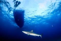 Καρχαρίες κάτω από μια βάρκα Στοκ εικόνες με δικαίωμα ελεύθερης χρήσης