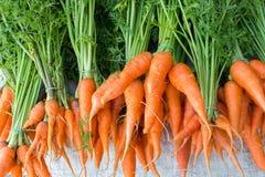 καρότα μωρών φρέσκα Στοκ Εικόνες