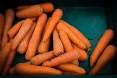 Καρότα σε μια αγροτική στάση Στοκ εικόνα με δικαίωμα ελεύθερης χρήσης