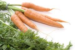 Καρότα στο άσπρο υπόβαθρο 005 Στοκ Εικόνες