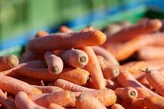 Καρότα φρέσκος οργανικός καρότων Κινηματογράφηση σε πρώτο πλάνο με το σαφή τομέα της εστίασης Στοκ Φωτογραφίες