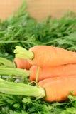 καρότα Στοκ φωτογραφία με δικαίωμα ελεύθερης χρήσης