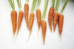 Καρότα Στοκ Εικόνες