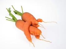 Καρότα στοκ φωτογραφία