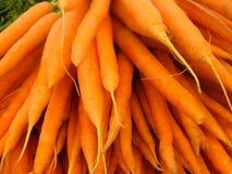 καρότα Στοκ Φωτογραφίες
