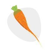 καρότο επίσης corel σύρετε το διάνυσμα απεικόνισης Στοκ Φωτογραφία