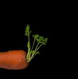 Καρότο στο μαύρο υπόβαθρο Στοκ εικόνες με δικαίωμα ελεύθερης χρήσης