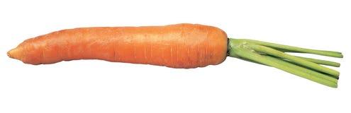 καρότο στοκ φωτογραφίες
