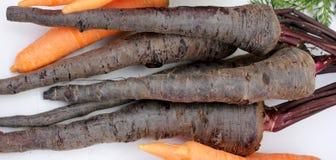 Καρότο Asita Pusa στοκ φωτογραφία με δικαίωμα ελεύθερης χρήσης