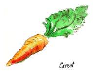 Καρότο Watercolor Στοκ φωτογραφία με δικαίωμα ελεύθερης χρήσης