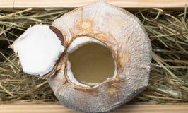 Καρύδα με το γάλα κοκοφοινίκων στο σανό Στοκ φωτογραφία με δικαίωμα ελεύθερης χρήσης
