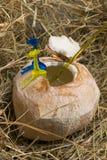 Καρύδα με το γάλα κοκοφοινίκων στο σανό Στοκ Εικόνες