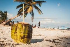 Καρύδα στην παραλία σε Playa Paraiso, Tulum, Quintana Roo, Mexi Στοκ εικόνα με δικαίωμα ελεύθερης χρήσης
