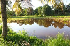 Καρύδες και λίμνες στοκ φωτογραφία με δικαίωμα ελεύθερης χρήσης
