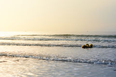 Καρύδες που επιπλέουν στη θάλασσα Στοκ Φωτογραφίες