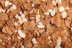 καρύδια δημητριακών ανασκ Στοκ Εικόνα