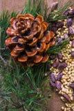 Καρύδια κέδρων Ξεφλουδισμένος και στο κοχύλι με τον κώνο κέδρων στοκ φωτογραφία με δικαίωμα ελεύθερης χρήσης
