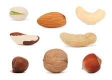 Καρύδια που τίθενται () Στοκ Εικόνα