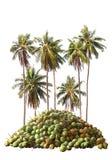 Καρύδα, δέντρο καρύδων Στοκ Εικόνες