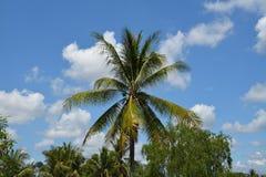 Καρύδα και ουρανός στοκ φωτογραφία με δικαίωμα ελεύθερης χρήσης