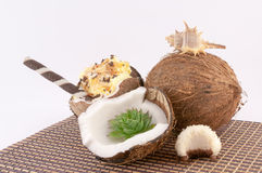 Καρύδα, κοχύλια και γλυκά καρύδων Στοκ Φωτογραφία