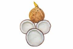 Καρύδα που απομονώνεται στο λευκό με το ψαλίδισμα της πορείας στοκ φωτογραφίες