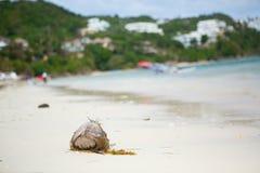 Καρύδα στην παραλία Diniwid, Boracay, Φιλιππίνες Στοκ Φωτογραφίες
