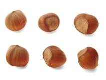 καρύδια έξι Στοκ εικόνα με δικαίωμα ελεύθερης χρήσης