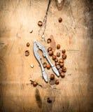 Καρύδια με τον καρυοθραύστης και το κοχύλι Στοκ Εικόνες