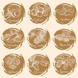 καρύδια που τίθενται Στοκ Εικόνες