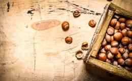 Καρύδια σε ένα καλάθι Στοκ φωτογραφία με δικαίωμα ελεύθερης χρήσης