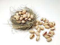 Καρύδια φυστικιών στη φωλιά Στοκ εικόνα με δικαίωμα ελεύθερης χρήσης