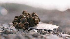 Καρύδια Backgorund Στοκ Φωτογραφίες